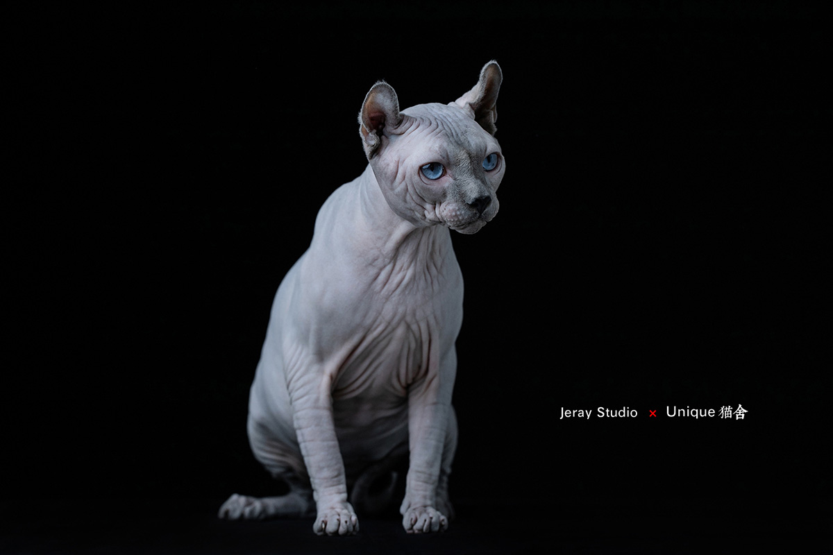 宠物猫咪-Jeray.Wang